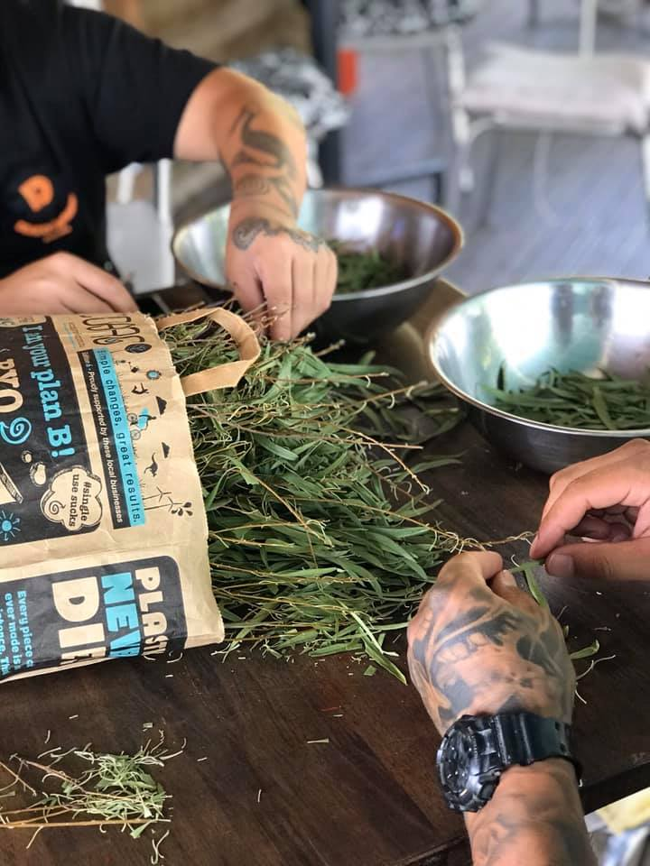 Sacred Harvesting of our Wellness Drink- Gumby Gumby tea from country of origin