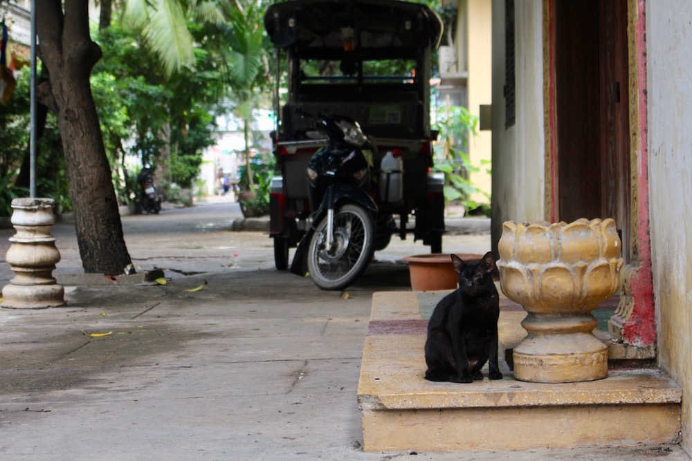 Black cat in front of tuk tuk in pagoda