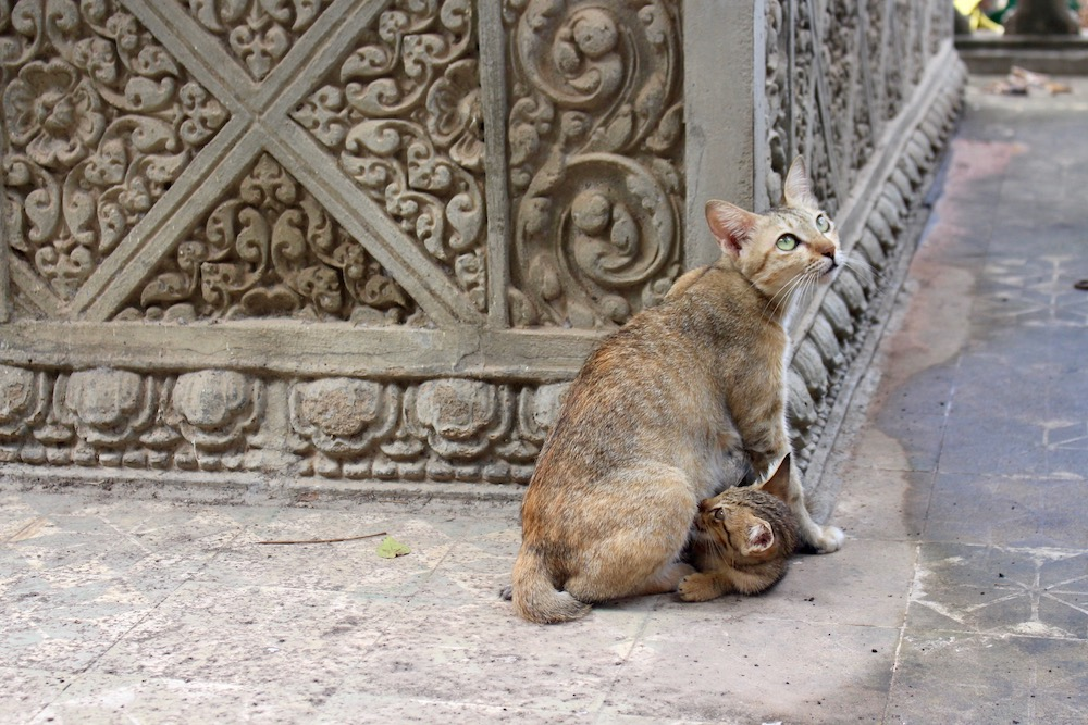 Mum cat feeding kitten in a pagoda